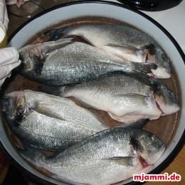Die Doraden entschuppen indem man mit einem Messer gegen die Schuppen schabt, bis sich keine Schuppen mehr auf dem Fisch befinden. Sind die Doraden nicht von den Innereien befreit, dann unter dem Kopf im vorderen Drittel bis zum Korpus ein Schnitt ansetzen und die Innereien entfernen. Zusätzlich darauf achten, die Kiemen zu entfernen. Oft gibt es die Fische schon vom Fischhändler gesäubert. Beim Großhändler kann es sein das die Kiemen noch nicht entfernt sind dann sollte man diese noch entfernen. Die Doraden dann gut auswaschen. Als nächstes die Doraden in eine tiefe Ofenform, oder Backblech geben ...