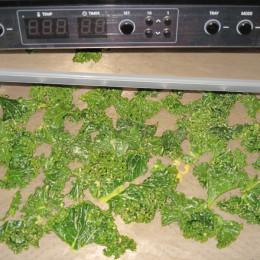 Am Schluß den Grünkohl 24h bei 42°C trocknen.